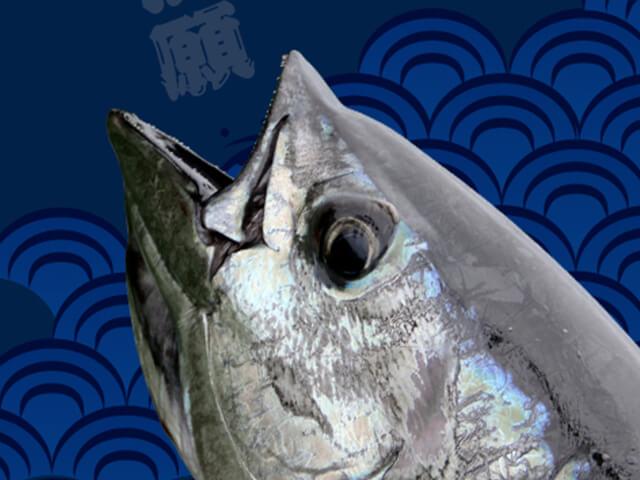壁紙 魚231